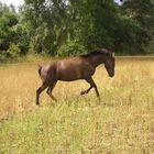 My horse, Miramis