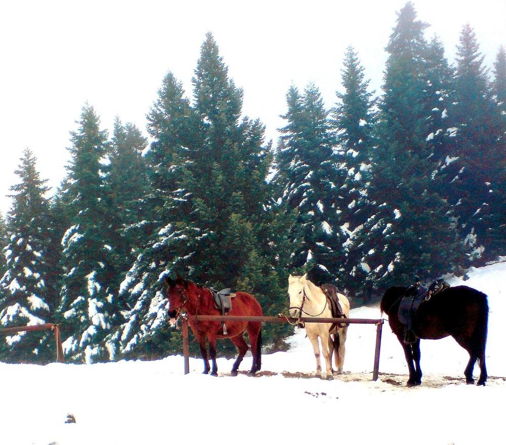 my horses on ice..