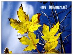 - my immortal -