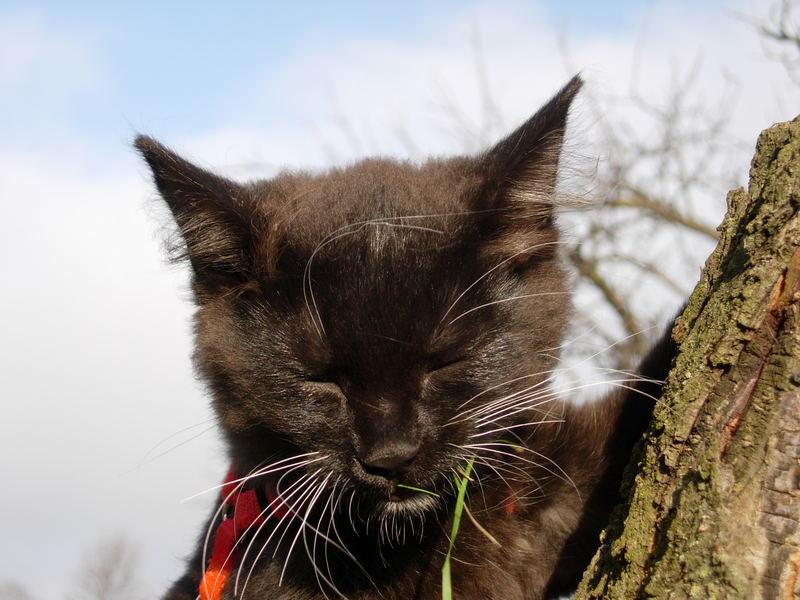 My kitty Tina :o)