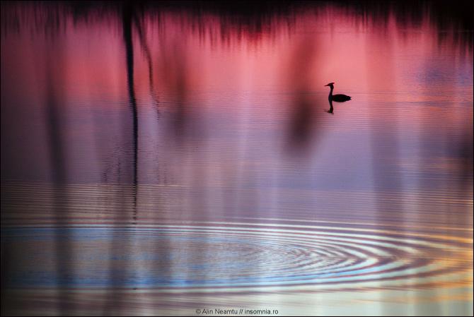 My Lake. Solitude