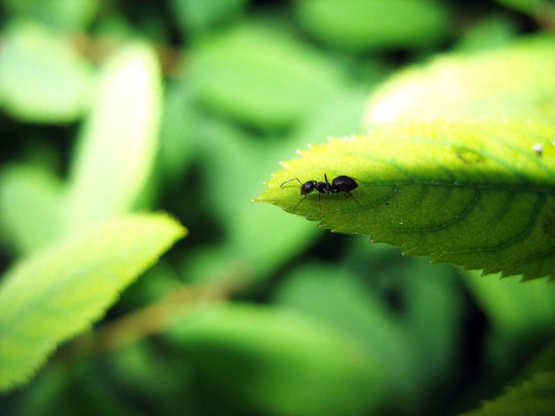 My little ant!
