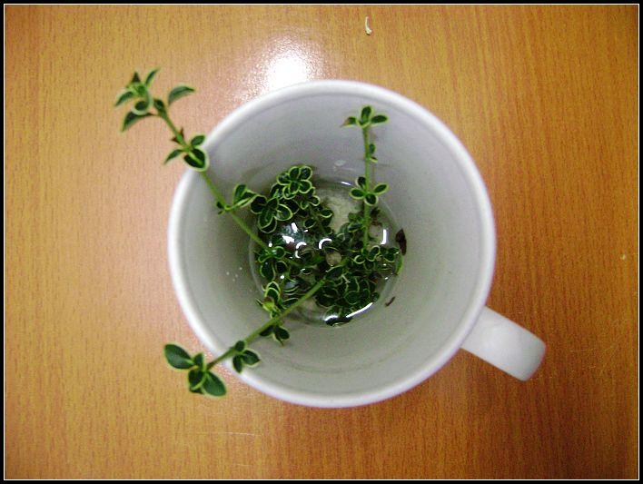 my little plant