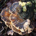 My my...you look like a fungi (fun guy...gettit?)