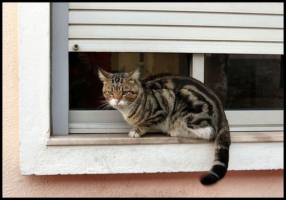My new friend , cat Félix a sweet one :-))))
