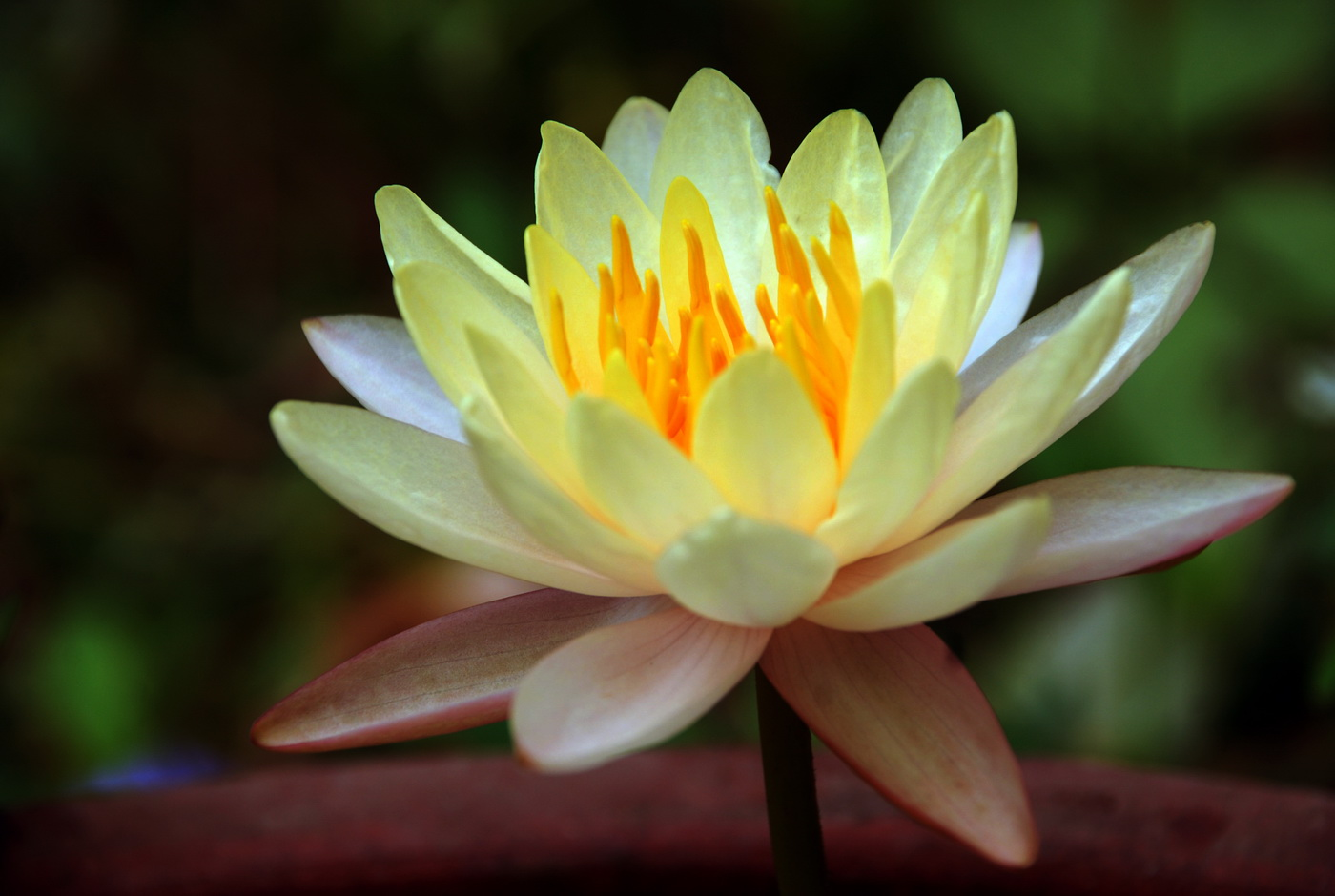 My new Lotus from my home