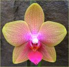 my new orchid