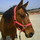 My own horse =]