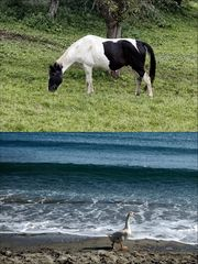 my pony is over the ocean .....