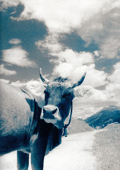 my psychedelic cow no. zero