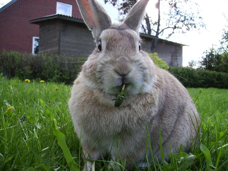 My Rabbit Arne :)