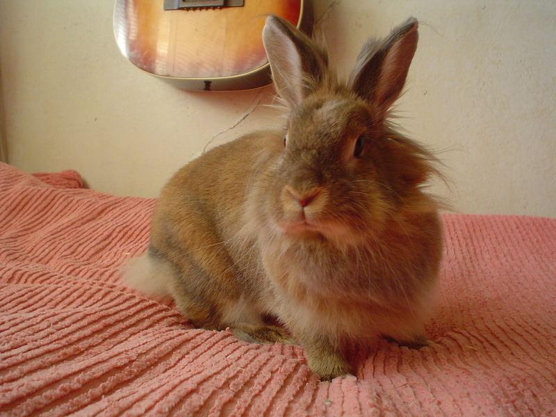 My Rabbit Tuffsan