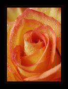 My Rose II