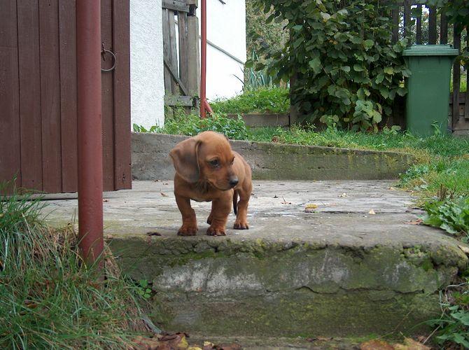 my sausage dog Reksio