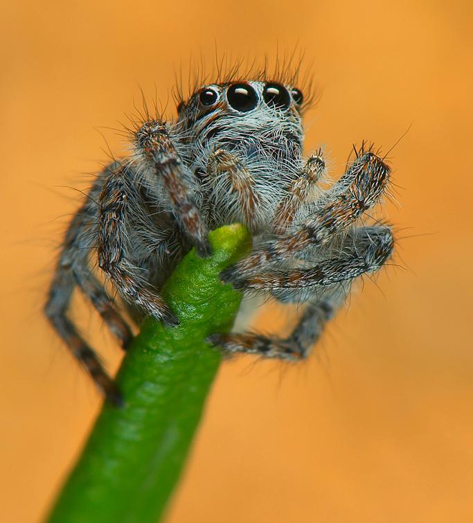 My Spider 03