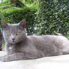my sweet cat
