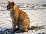 My Tunisian Cat