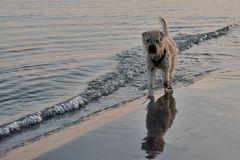 my walking dog