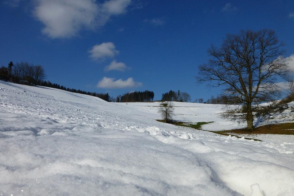 my winter wonderland today