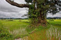 Myanmar (76)