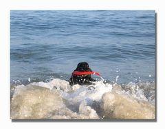 Myself beim Surfen  ... heissa, da bin ich wieder!