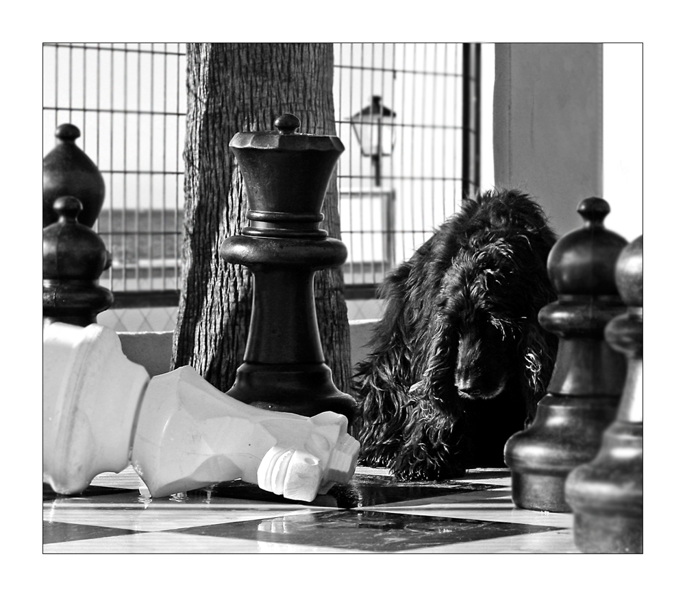 Myself .... chess location # 2