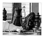 Myself .... chess location # 2
