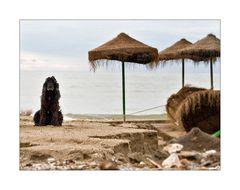 Myself ha vuelto a casa, aber die Playa ist futsch!