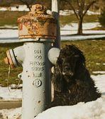 Myself und der Hydrant fuer Japan ...
