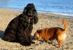 Myself und der Strandagent ...