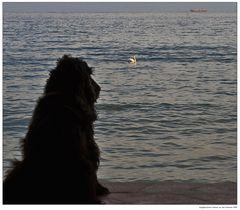 Myself und ein Schwan im Meer 'San Valentino' ...