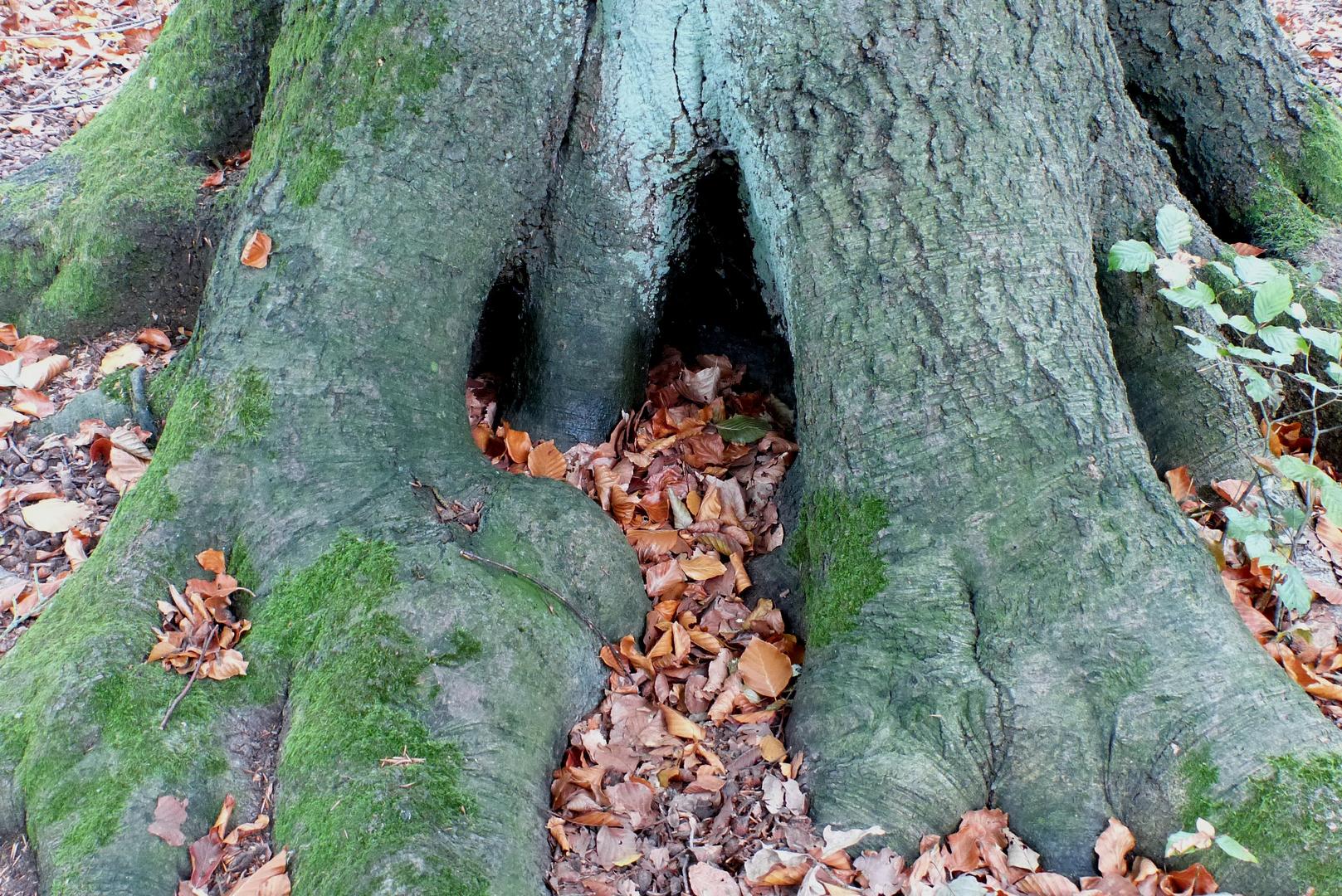 Mysteriöse Höhle in der Baumwurzel