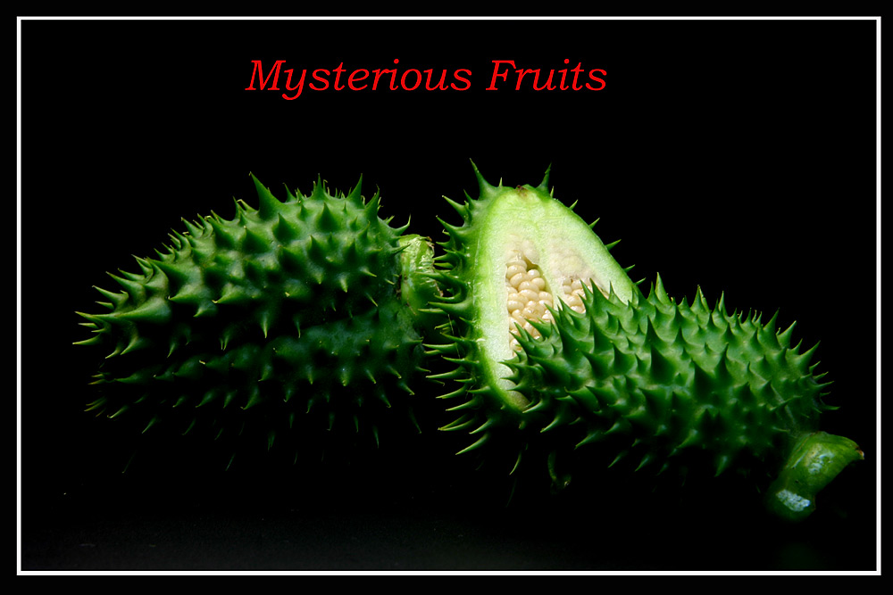 Mysterious Fruits