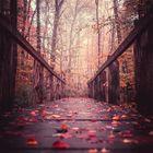 Mystic Autumn