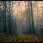 Mystic des Waldes