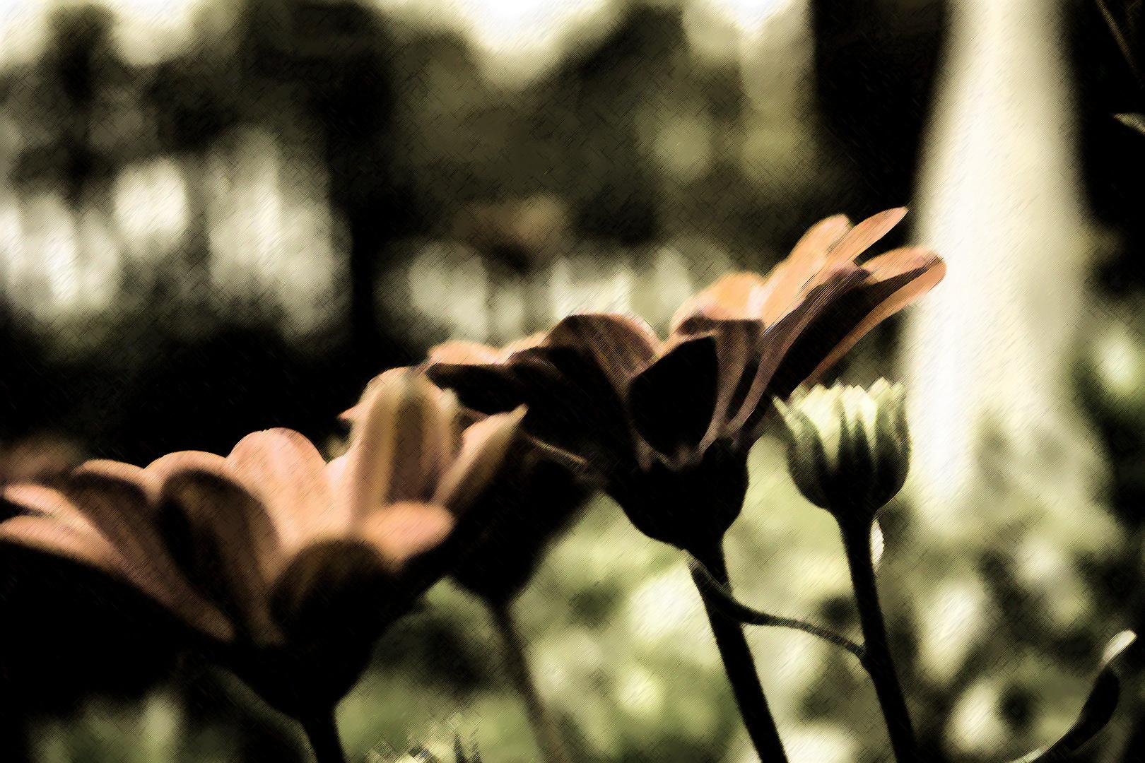 Mystic Flowers.......
