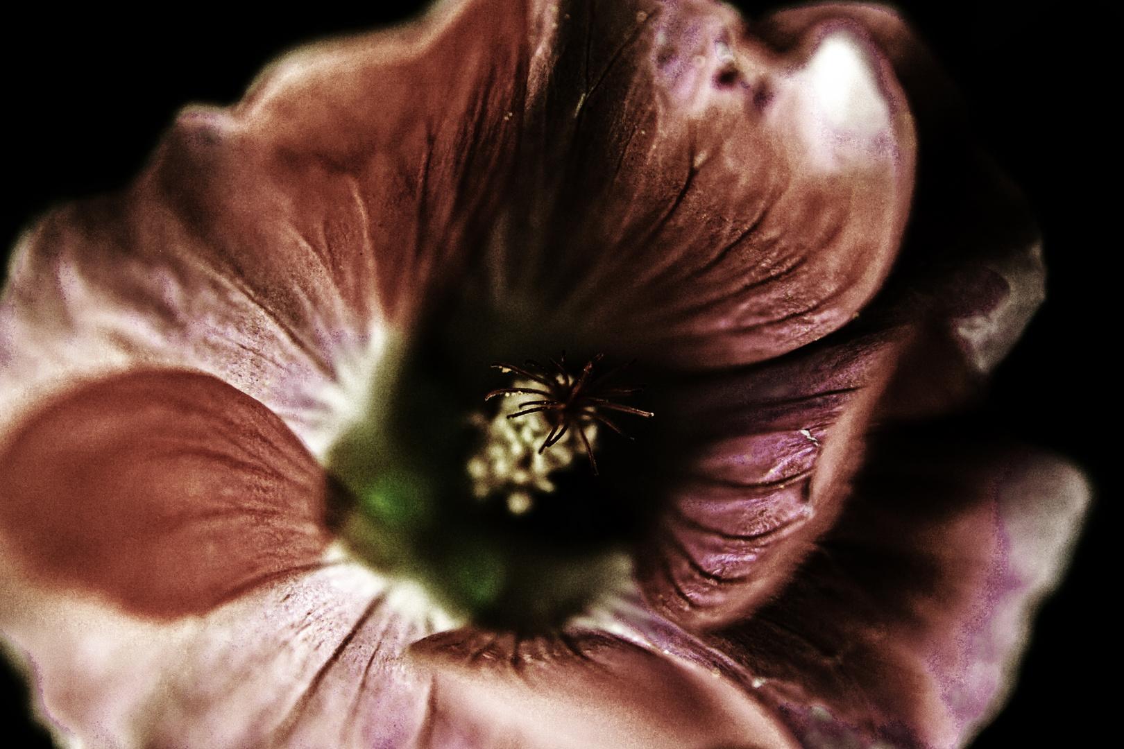 Mystic Flowers Part II