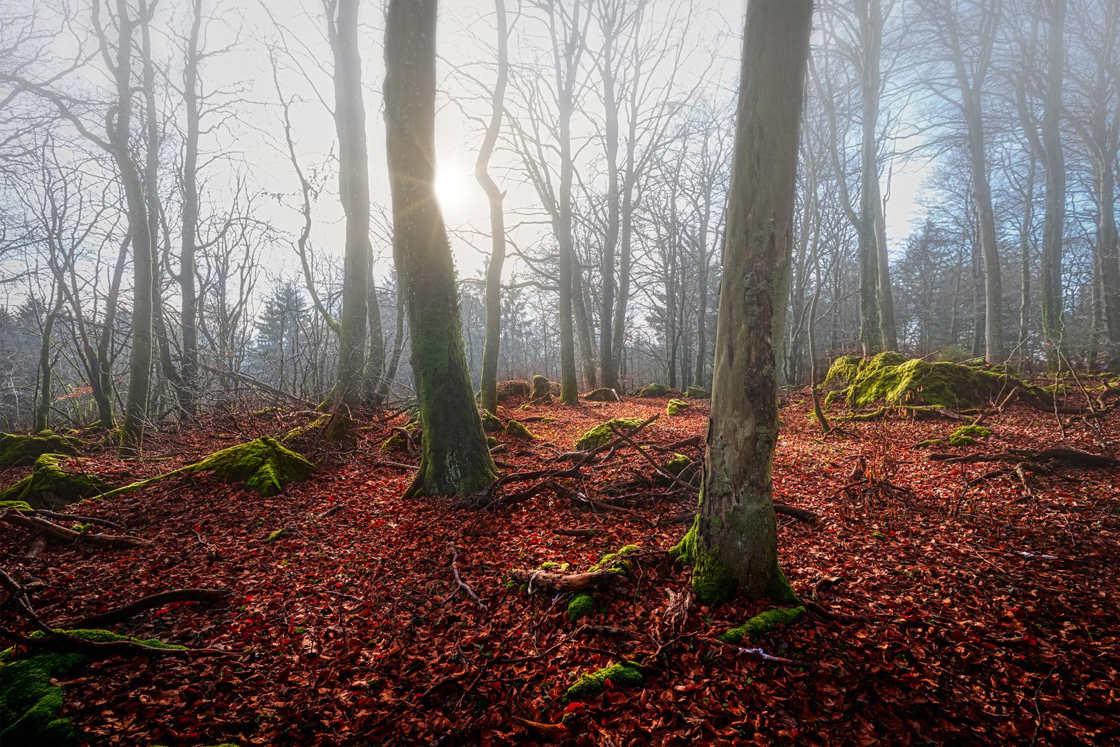 Mystic Forest Ernstberg/Eifel
