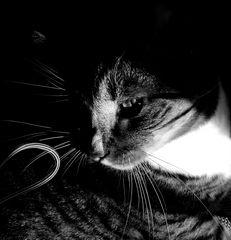 mystic life of cats