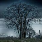 Mystic of a tree