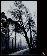 ........mystic tree.........