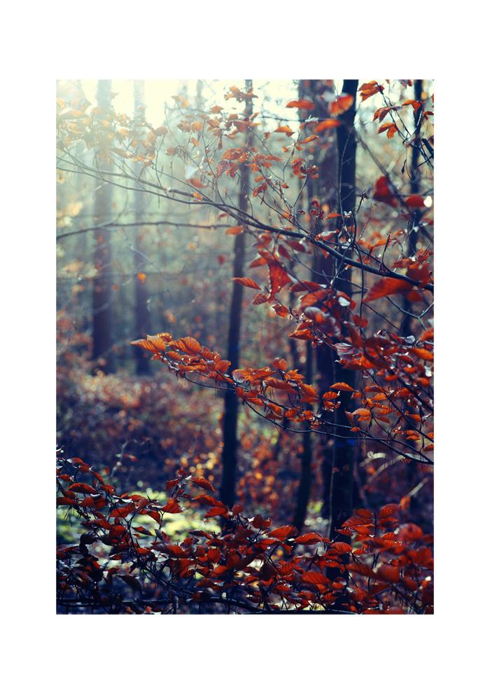 - mystic tree -