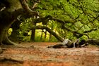 *mystic trees*