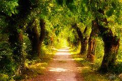 >>> Mystic Way