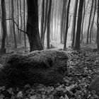 mystic wood