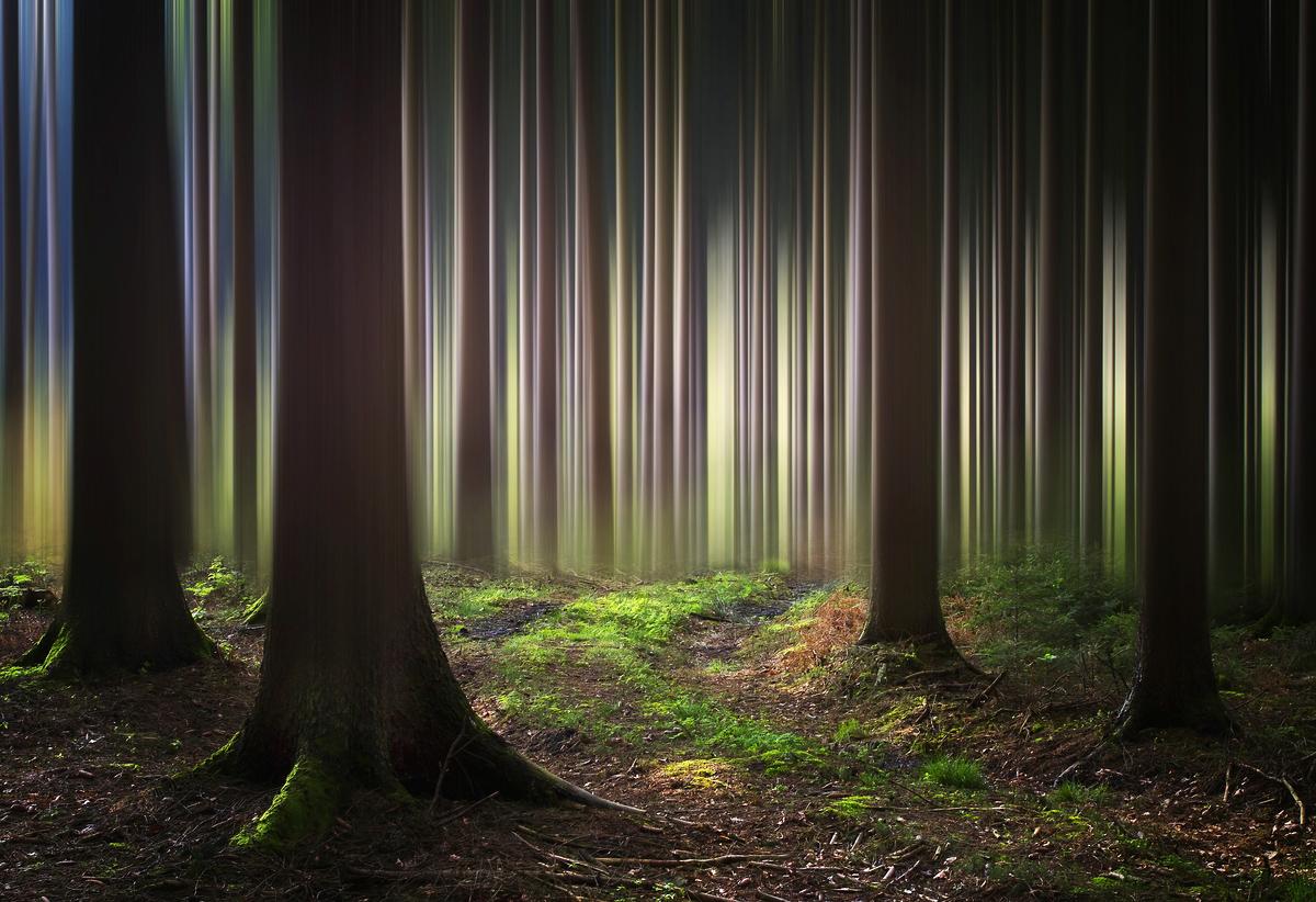 Mystic Wood (Spring Version)