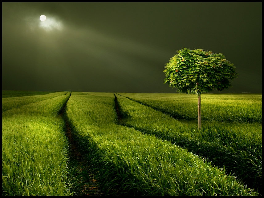 mystical landscapes 1