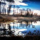 Mystische Donauau bei Grein