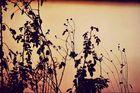 mystische Pflanzen