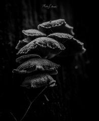 Mystische Pilze